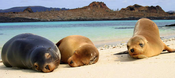 The Galapagos Islands is at the top of our list: Galapagos seals.