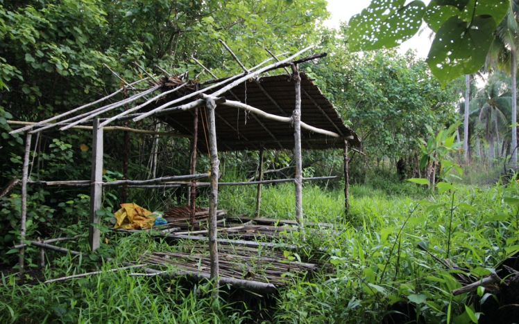 Abandoned hut in the jungle.